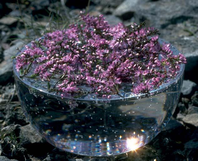 Bachblüten Herstellung