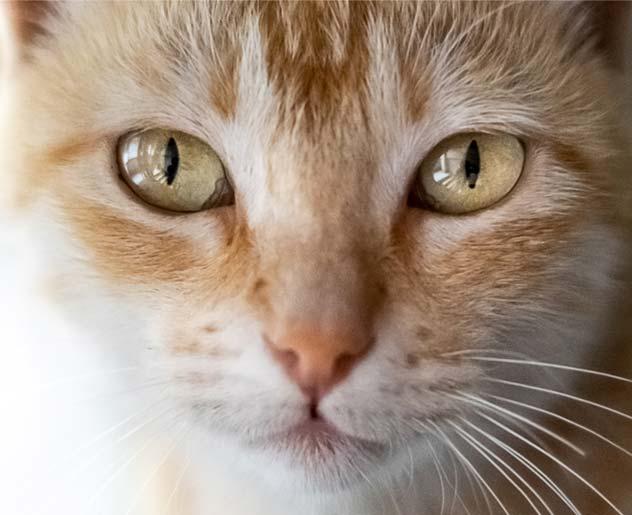 Bachblüten Katze